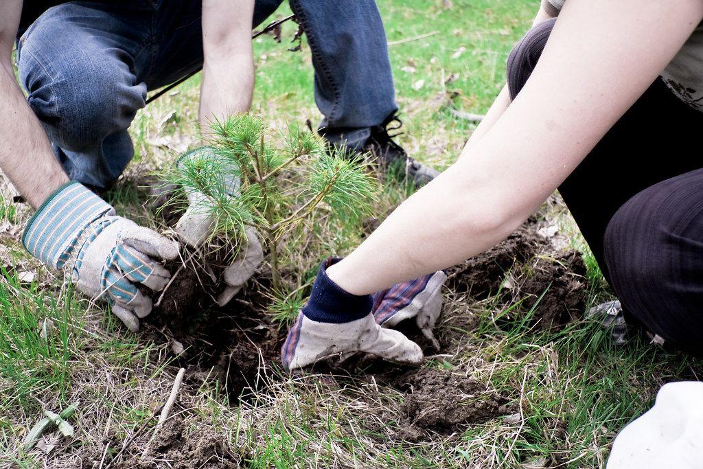 Ak chceš zmaturovať, musíš zasadiť 10 stromov. Nový zákon na Filipínach chce pomôcť nášmu životnému prostrediu