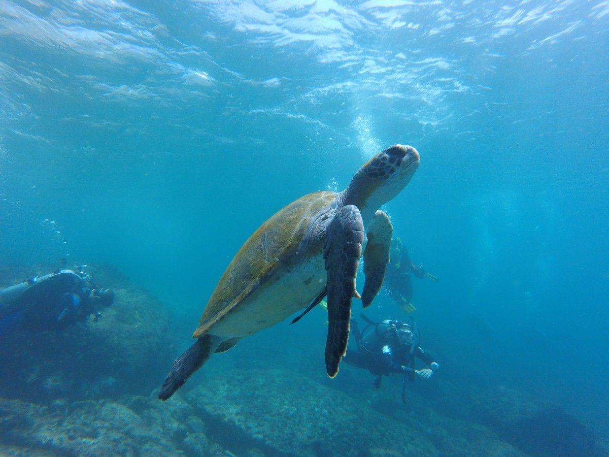 Luxusný rezort na Maldivách hľadá človeka, ktorý sa v lete bude starať o korytnačky, bývať v plážovej vile a jesť zadarmo