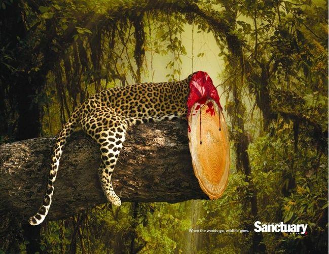 Keď sa začínajú strácať lesy, začínajú sa strácať aj zvieratá.