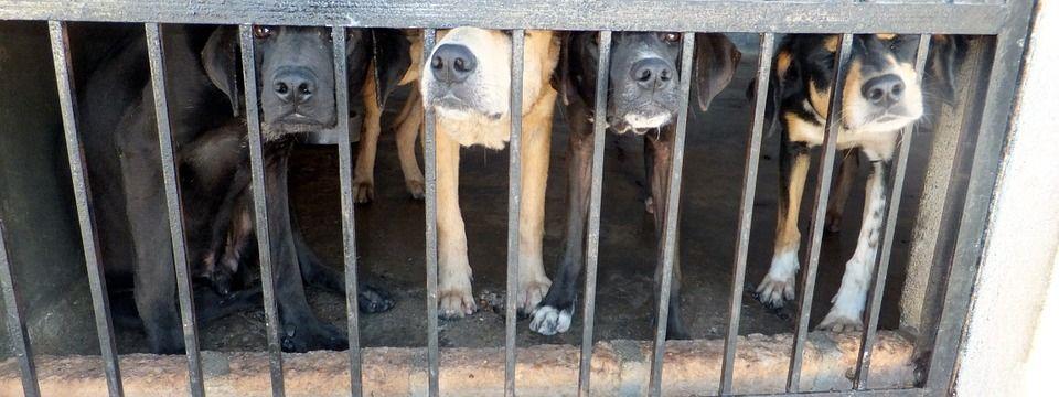 Až osm let natvrdo za týrání zvířat či provozování množíren. Českým parlamentem posunul novelu zákona