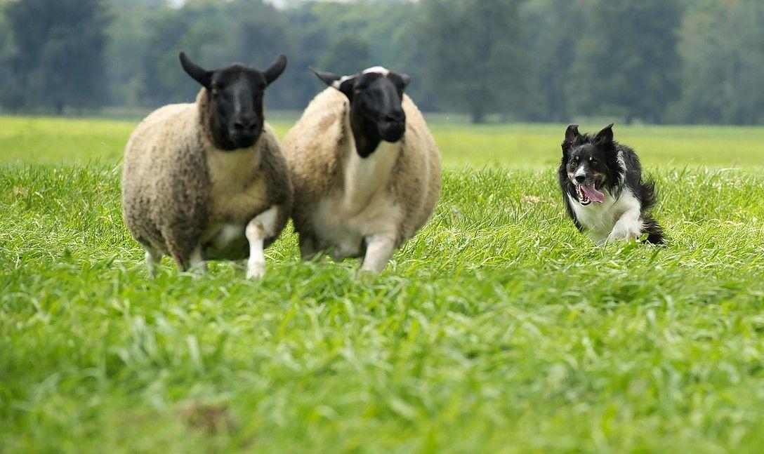 Nový výskum dokázal, že mozgy psov sa prispôsobili ľudským potrebám