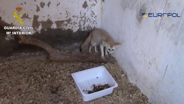 Slovenská polícia sa stala súčasťou medzinárodného vyšetrovania, odhalili organizovanú skupinu, ktorá obchodovala so zvieratami