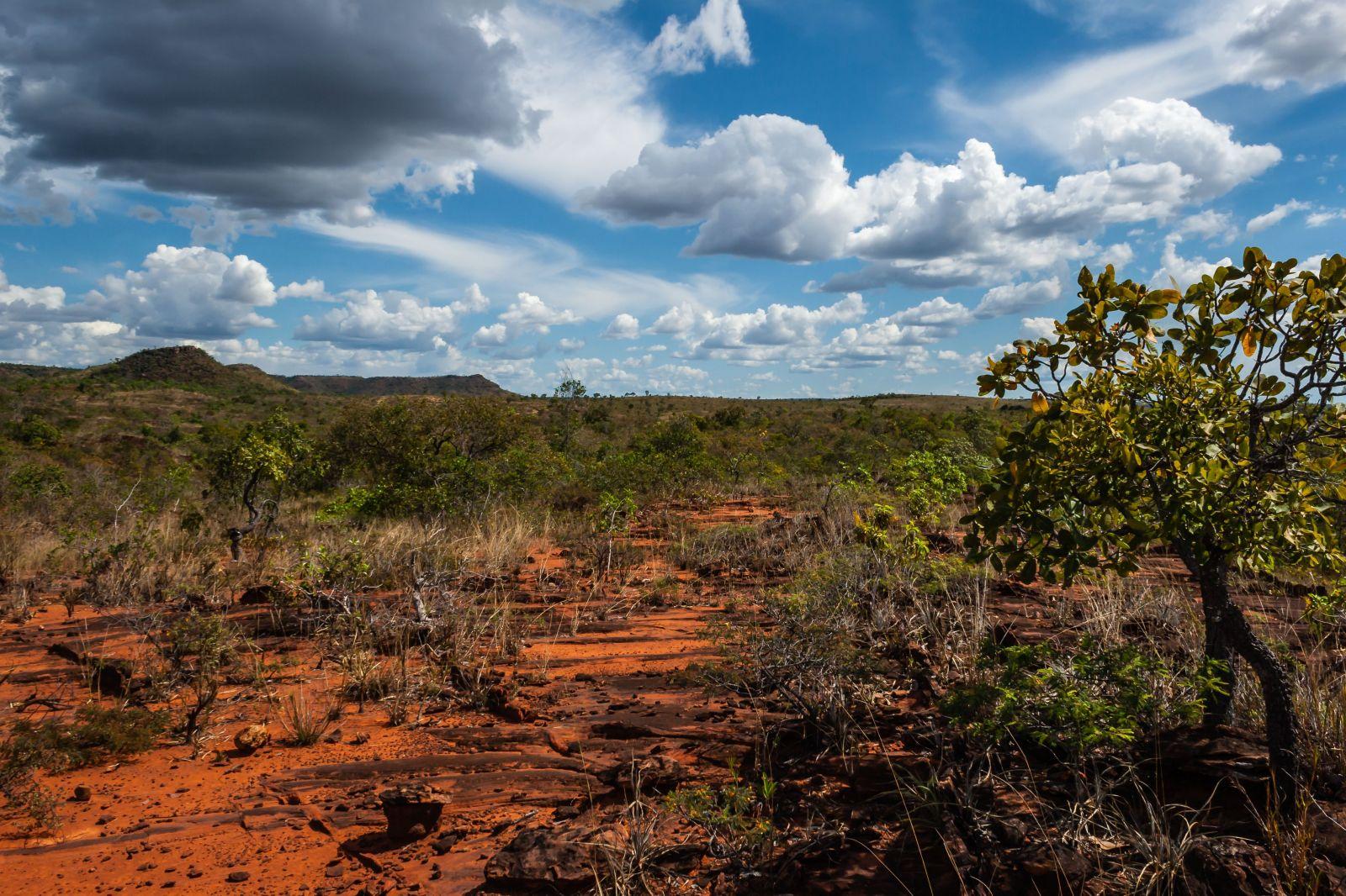 Pár kilometrov od Amazonu sa nachádza územie, ktoré má ešte väčšie straty, pritom je domovom až 5 % živočíchov celej planéty