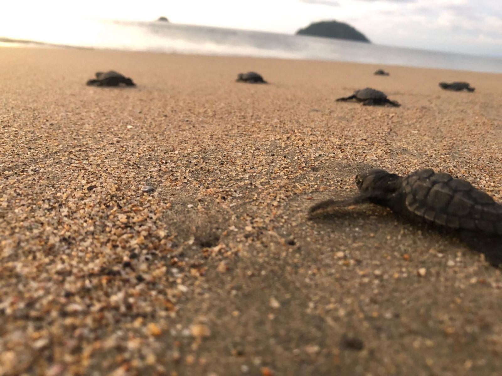 Bola v Mexiku zachraňovať korytnačky, no nestihla let domov. Študenti z Mlynov sa jej vyzbierali na letenku
