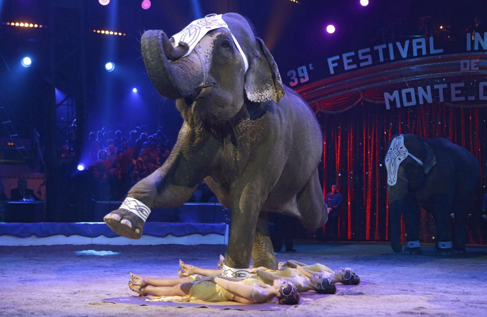 Francúzsko chce zakázať používanie divokých zvierat v cirkusoch. Vláda tiež plánuje skoncovať s norkovými farmami