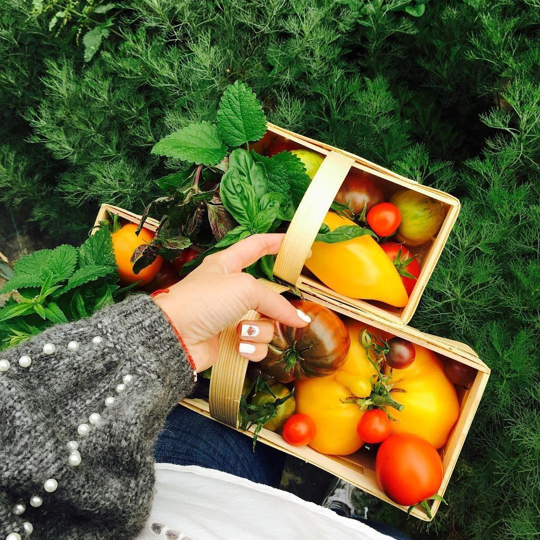 Mladý pár pestuje v Bratislave viac ako 50 druhov paradajok. Ľudia si ich môžu prísť sami nazbierať (Rozhovor)