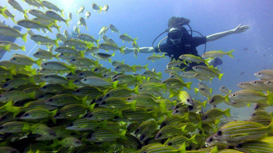 Kedysi sa potápala so žralokmi, dnes sa venuje vlastnej značke. Dominika dáva prácu aj ženám na dôchodku, tie šijú pre ňu vaky