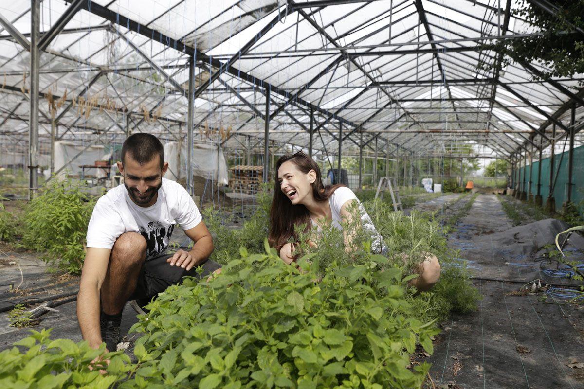 Mladý pár pestuje v Bratislave viac ako 50 druhov paradajok. Ľudia si ich môžu prísť sami pozbierať (Rozhovor)