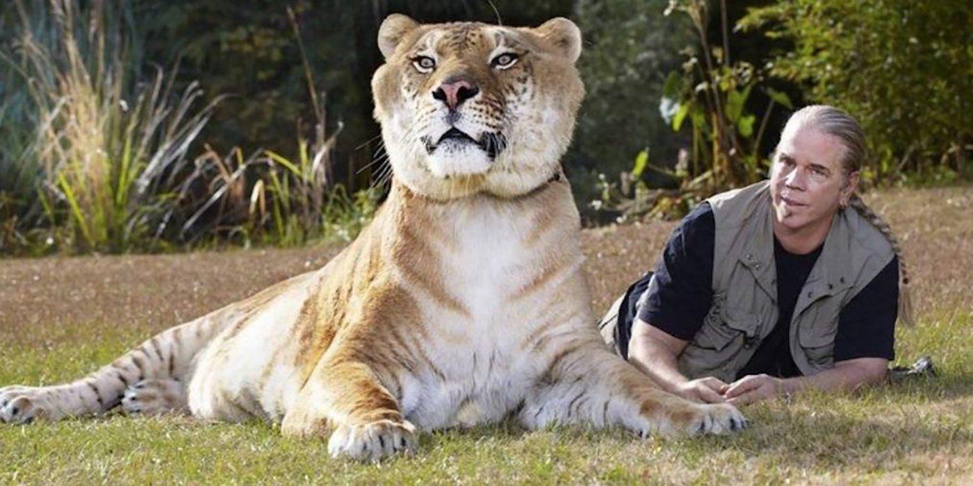 Recenzia: Tiger King je najkontroverznejším dokumentom roka o nájomných vraždách, exotických zvieratách a neuveriteľných ľuďoch