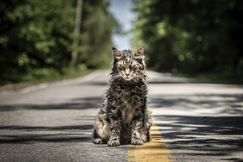 Cyntoryn zvieratiek nie je urážkou knižnej adaptácie, ale ani adeptom na horor roku (Recenzia)