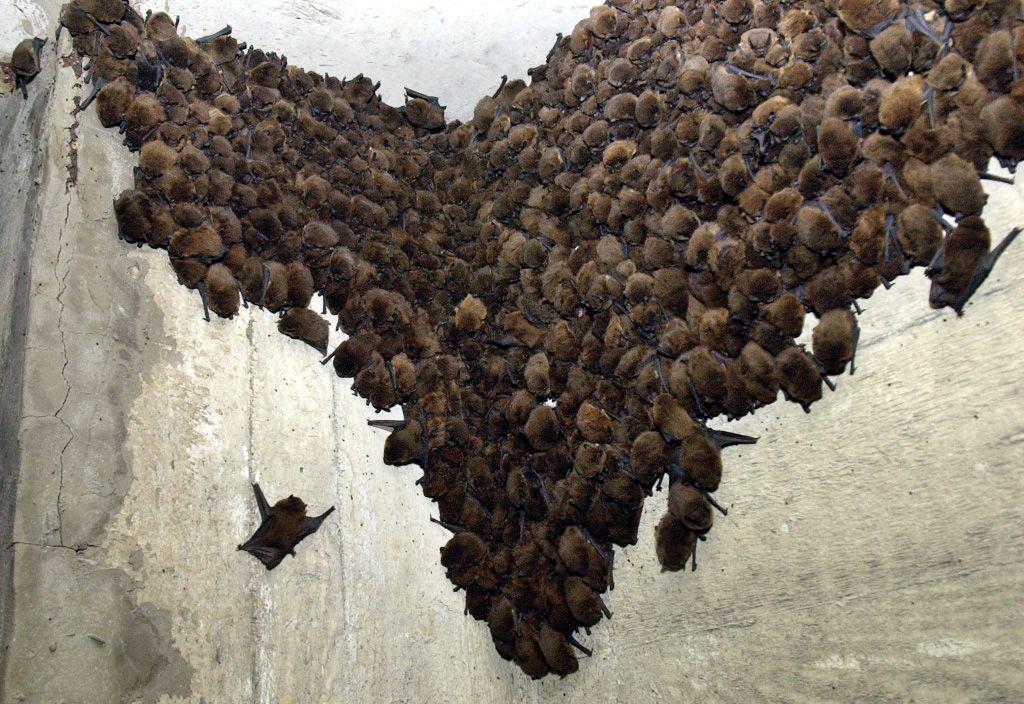 Turisti v Slovenskom krase omylom vyhubili celú kolóniu netopierov v približnej hodnote 70 000 €