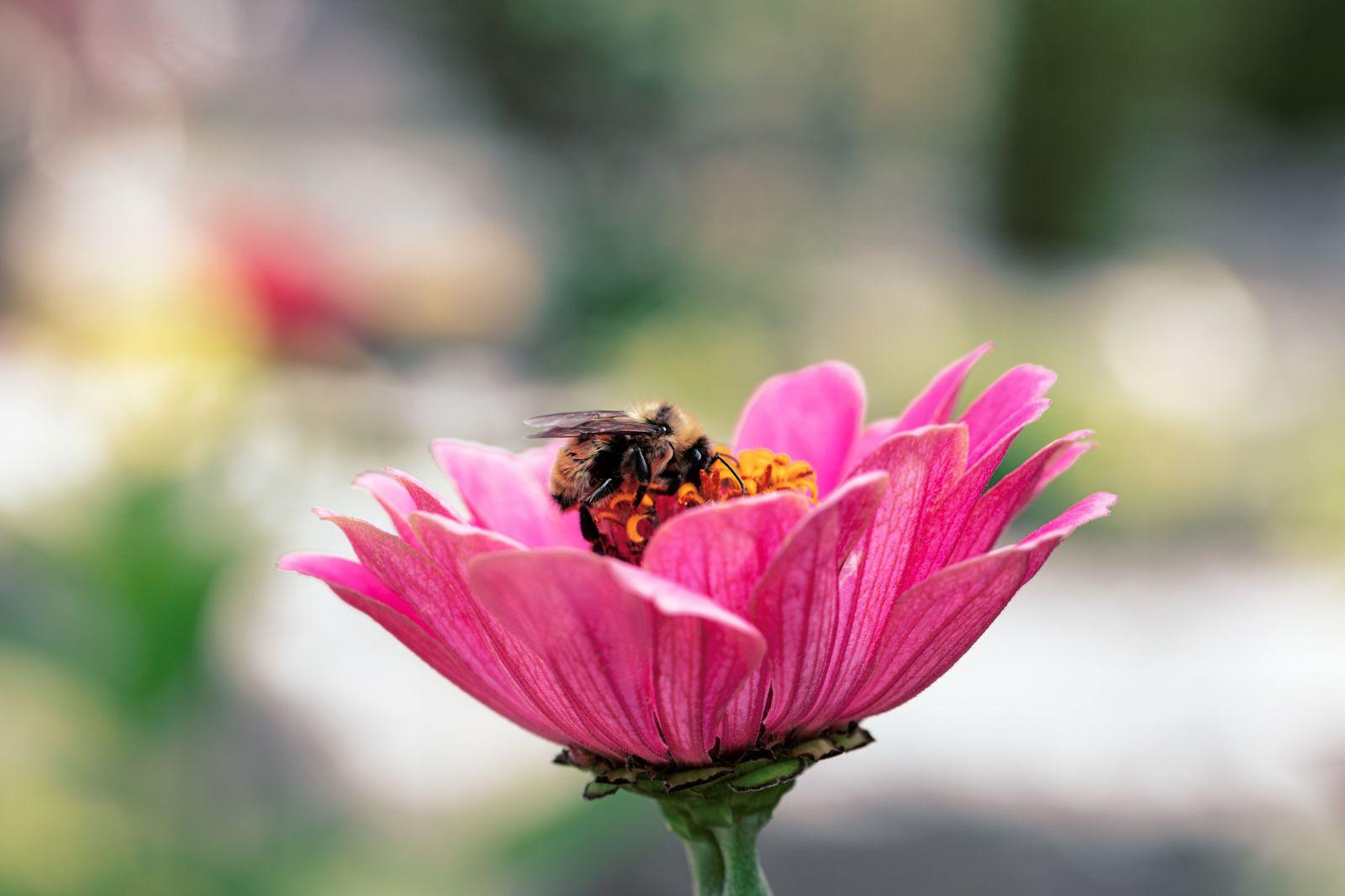 KVÍZ: Vedel si tieto zaujímavosti o včelách a mede?