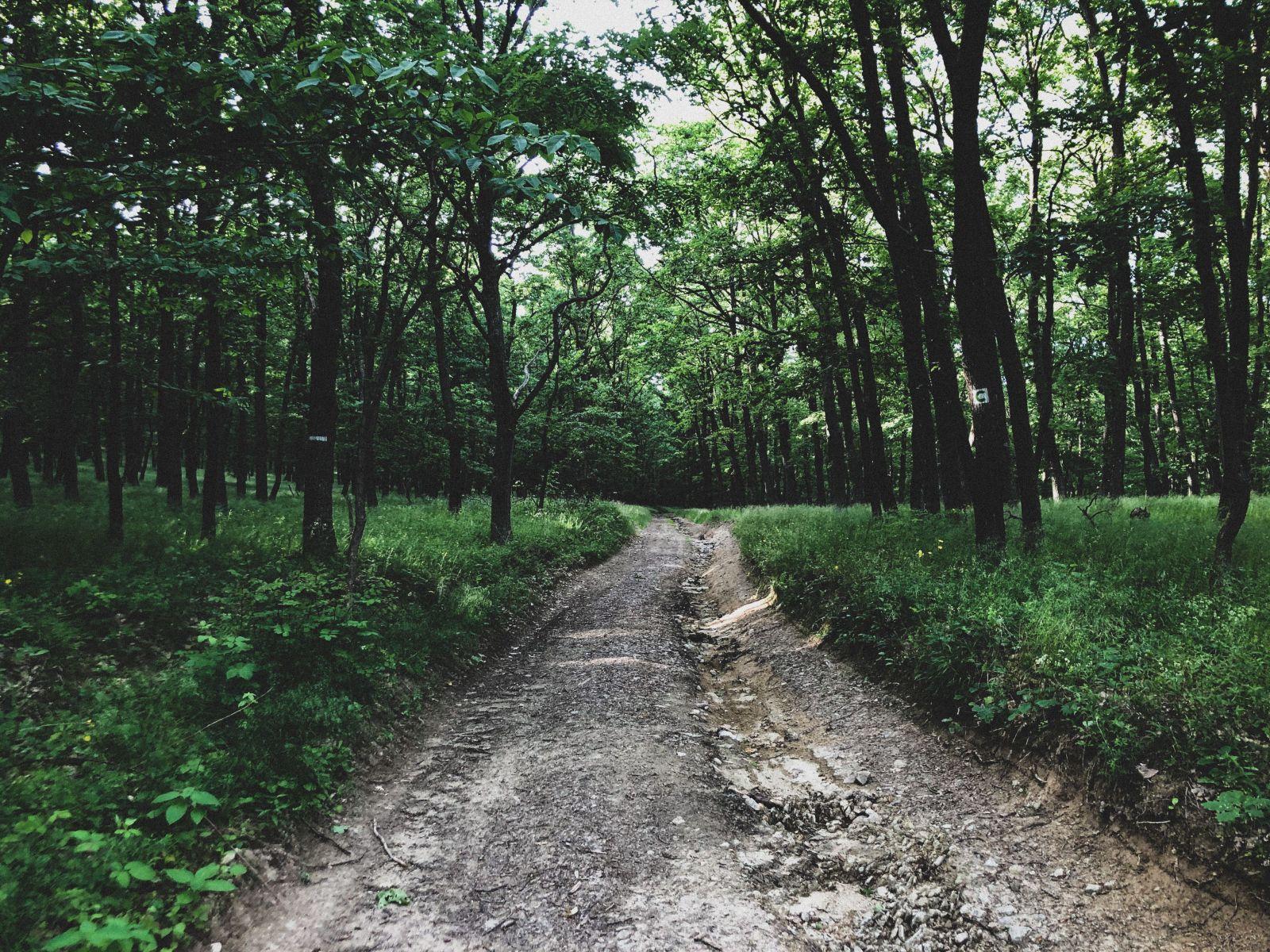 Prenocovali sme uprostred najtajomnejšieho lesa Slovenska. Čo sa nám stalo počas noci v pohorí Tribeč? (Reportáž)