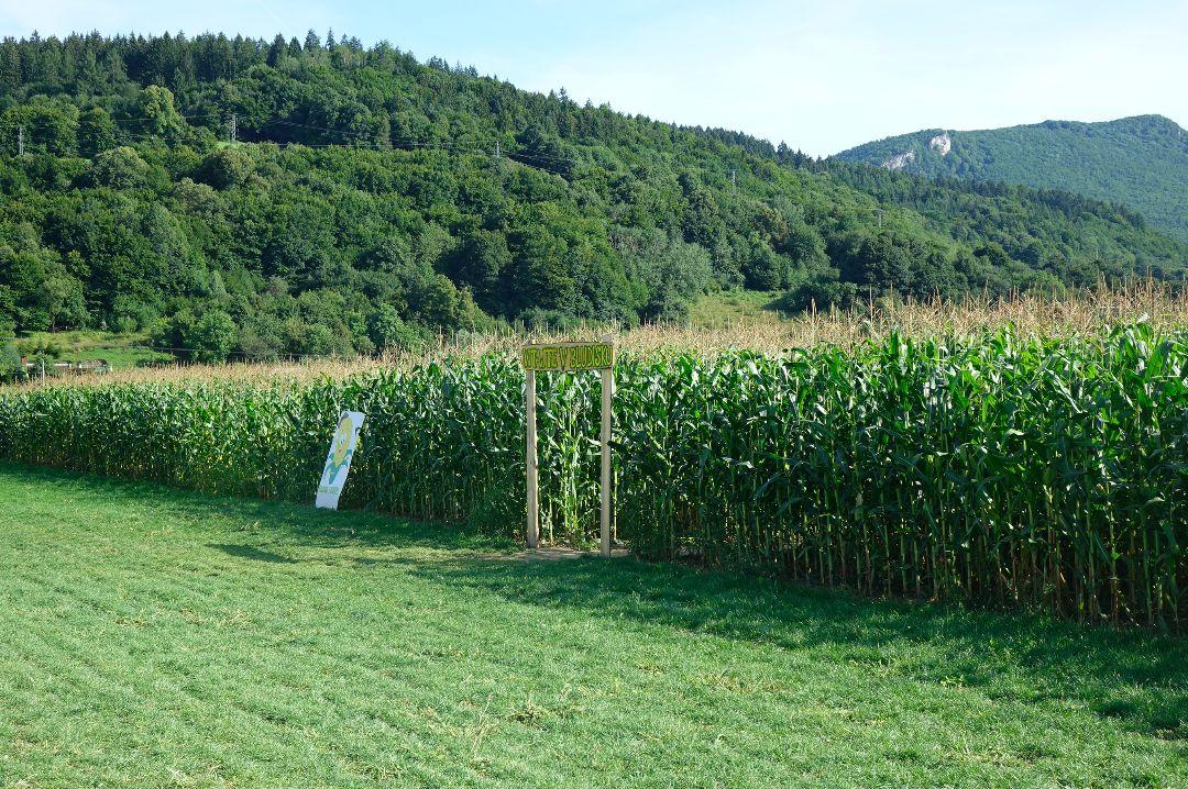 Blúdili sme v obrovskom kukuričnom labyrinte. Čo všetko nás postretlo a kedy môžeš zažiť aj nočné blúdenie? (Reportáž)