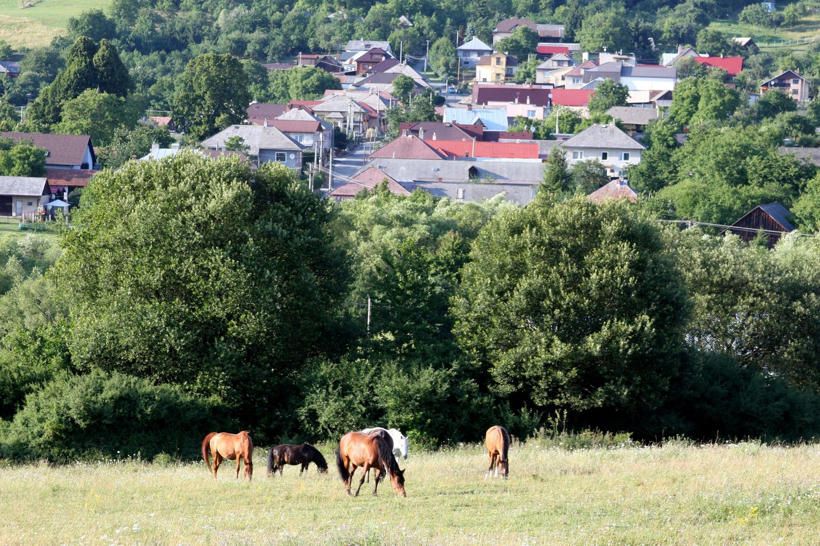 Konská mafia na východe. Z fariem zmizli desiatky zvierat. Majitelia pátrajú na vlastnú päsť, koňa našli až v Rumunsku