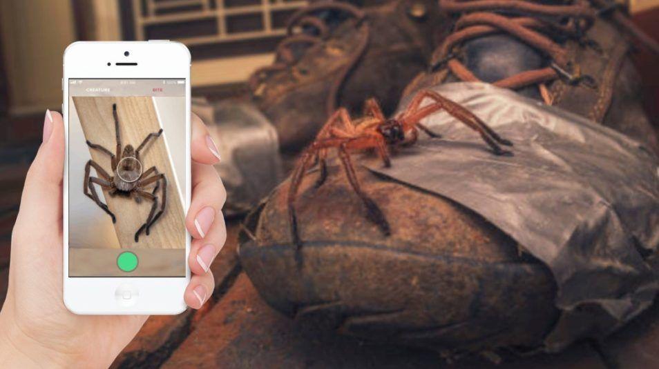 Austrálčania dostanú Shazam pre hady a pavúky. Mobilná aplikácia odhalí, či ťa konkrétny druh dokáže zabiť