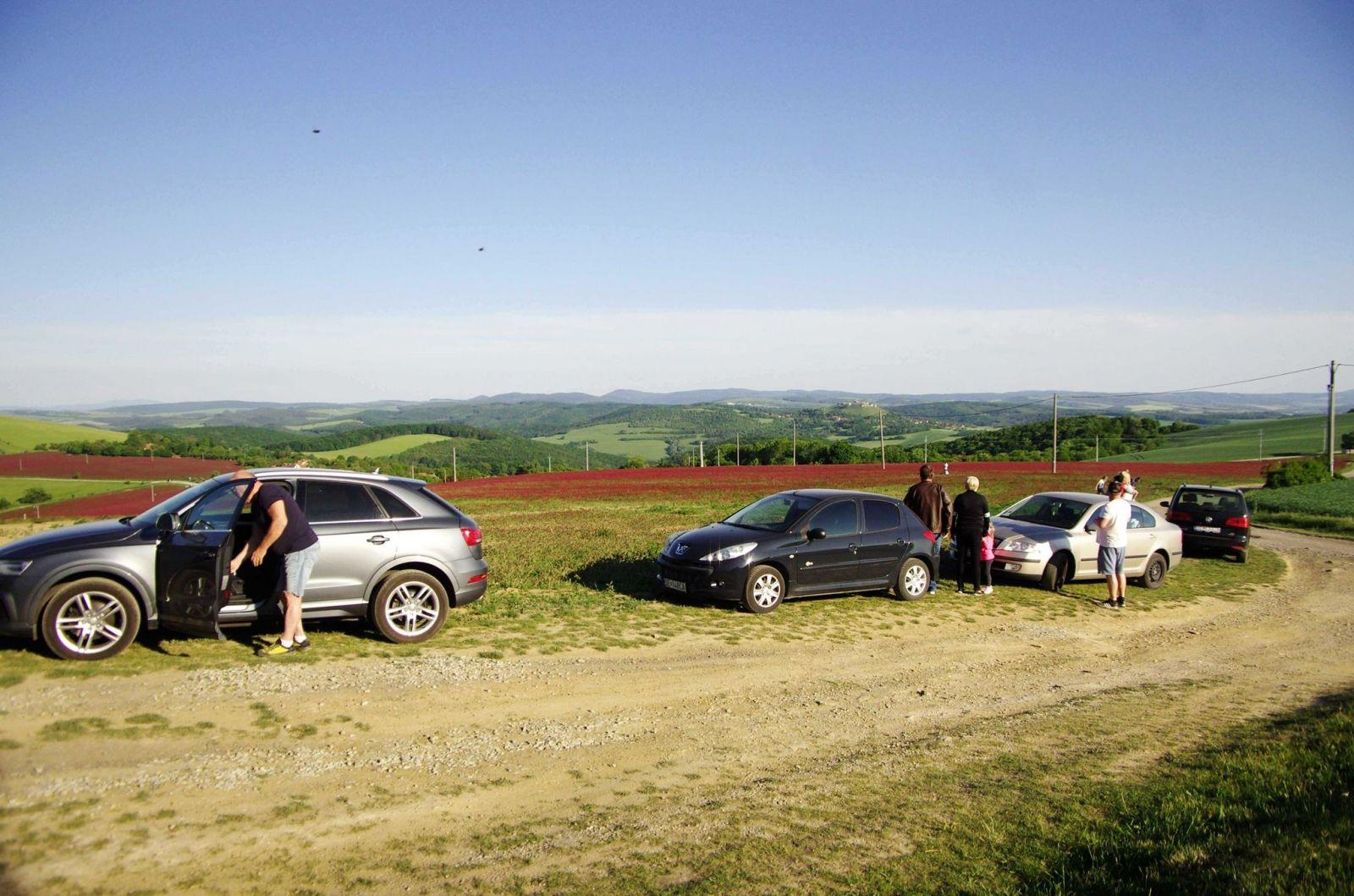 Slováci objavili ďatelinové pole na Záhorí. Majiteľovi ho začali ničiť kvôli fotkám na Instagram
