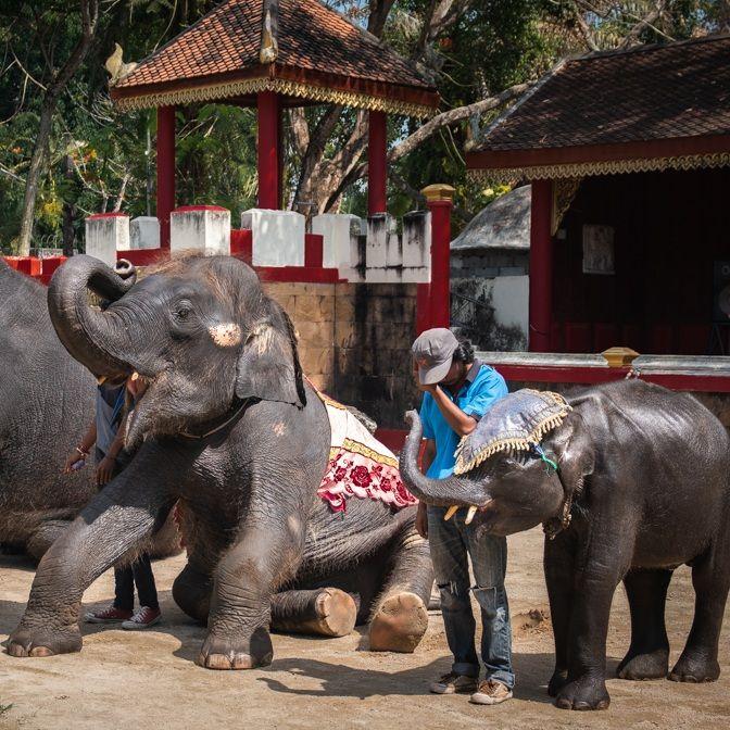 """Sloní mládě zemřelo poté, co si zlomilo obě zadní nohy. V thajské zoo ho nutili """"tančit"""" i několikrát denně"""
