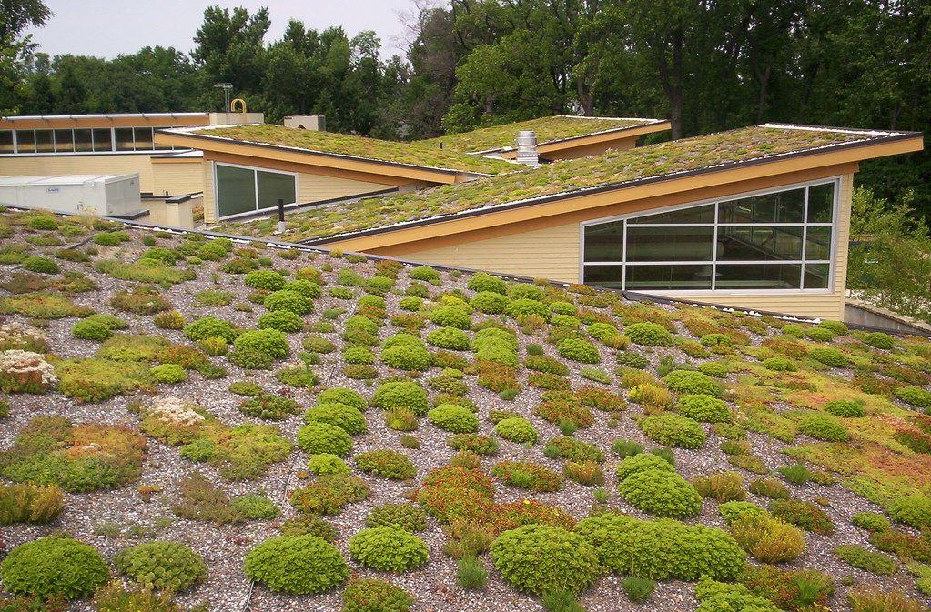 Brno dává 20 milionů do programu zelených střech. Zadržují vodu a ochlazují město