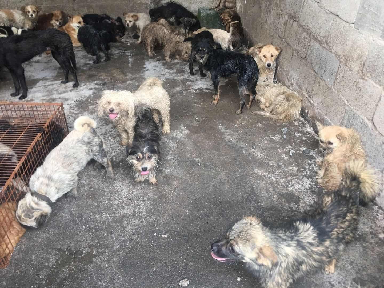 Čínsky festival psieho mäsa pobúril ľudí po celom svete. Jesť mäso domácich miláčikov je podľa nich zločin