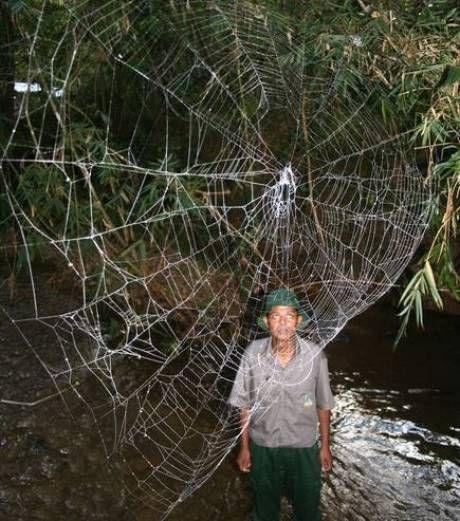 Pavúky pochádzajúce z ďalekého Madagaskaru obľubujú orálny sex a výnimočný nie je ani tvrdý kanibalizmus