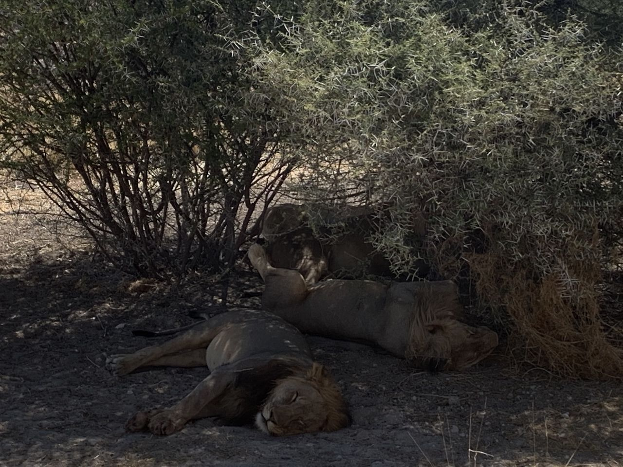 V Namíbii môžete ísť safari úplne sami bez sprievodcov. Ako sa dá do tejto africkej krajiny dostať?
