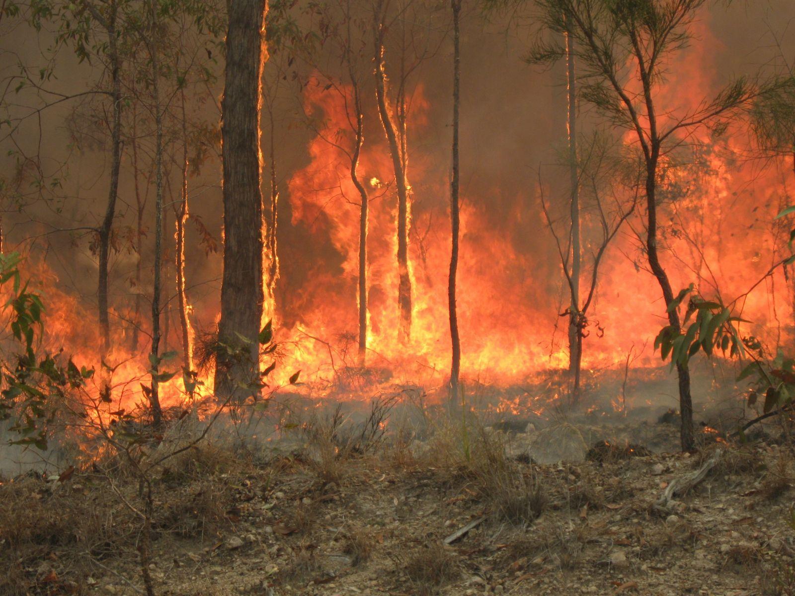 Bouřlivý začátek roku 2020: Hořel prales v Austrálii, lidé věřili v začátek 3. světové války, Čínu ochromil smrtící koronavirus