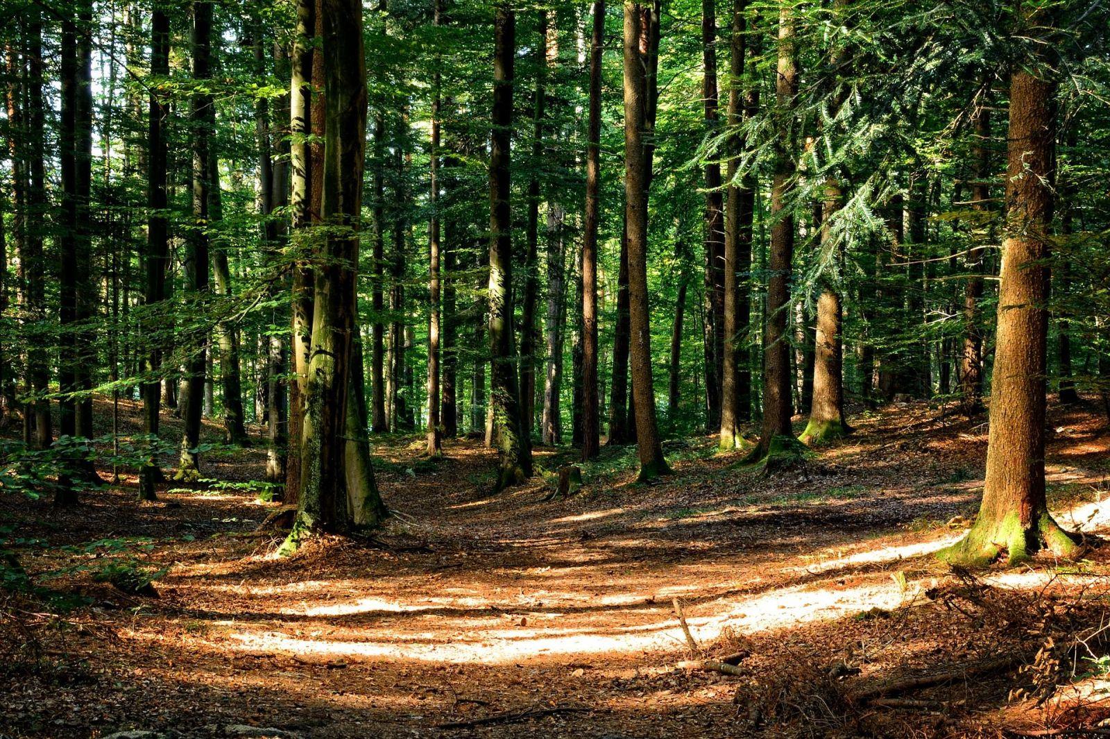 Česko rozdá 100 milionů na výsadbu stromů. Pomoct životnímu prostředí tak může úplně každý