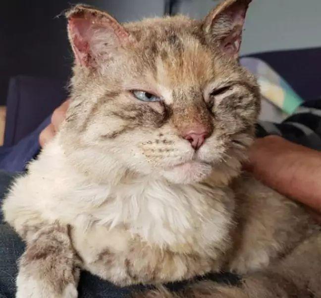 Mačka ako zázrakom prežila 7 dní v austrálskych požiaroch. Nechali ju tam majitelia, pri evakuácii ju nevedeli nájsť