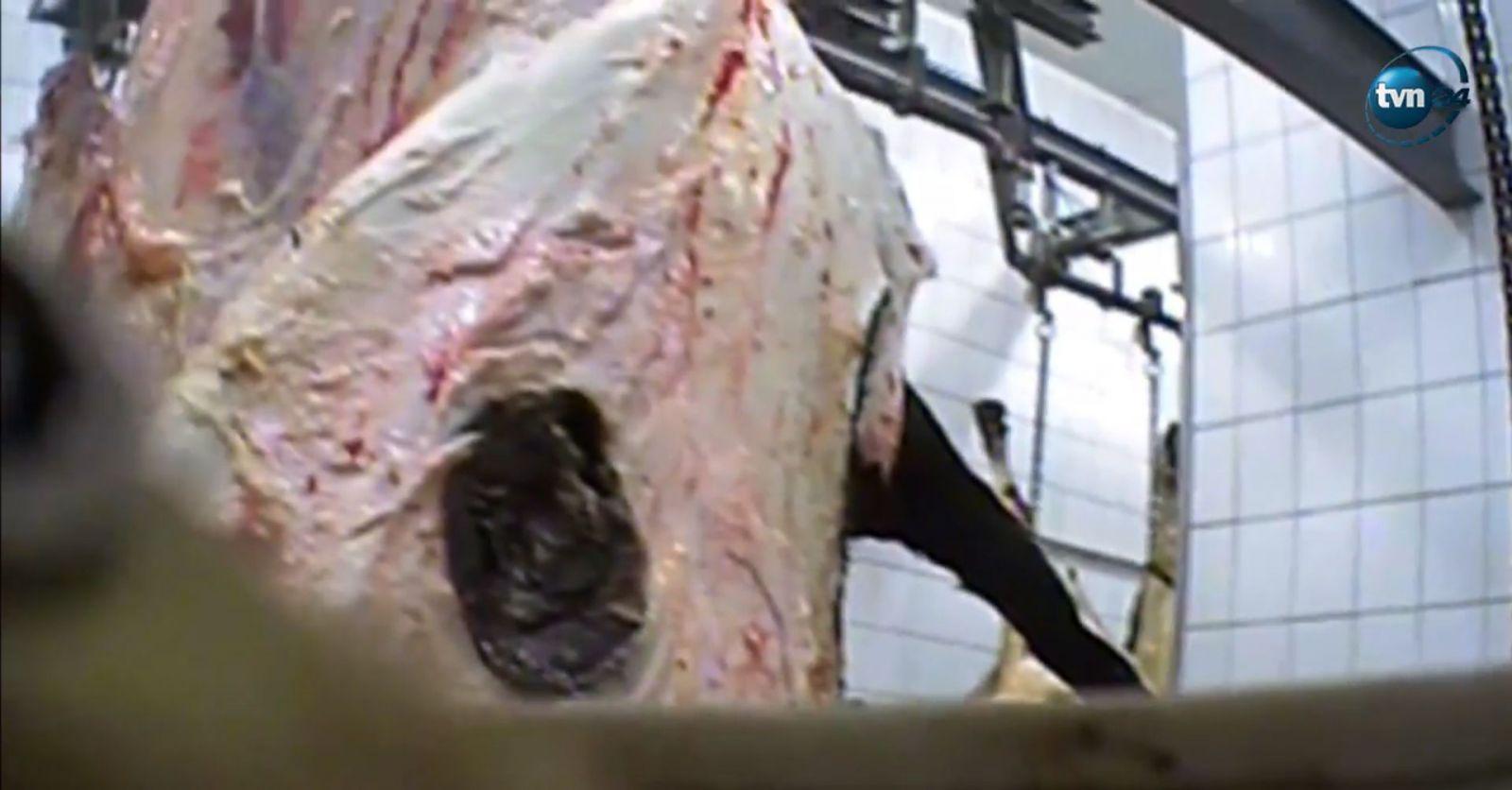 """Na bitúnku """"porcujú"""" choré zvieratá, mäso posielajú do obchodov. Hovädzie z Poľska radšej nejedz"""