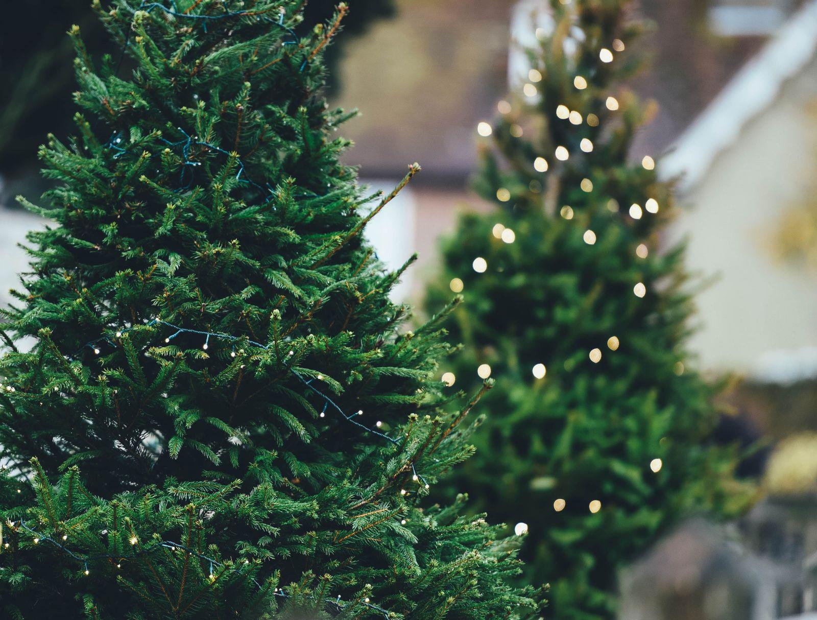 Aj na Vianoce môžeš byť EKO. Zasaď stromček do kvetináča a navar len toľko, koľko naozaj zješ